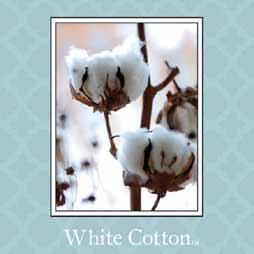 White Cotton